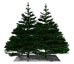 pine1sm